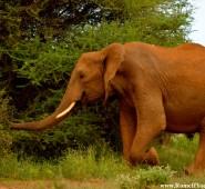 Kenya Elephants 4