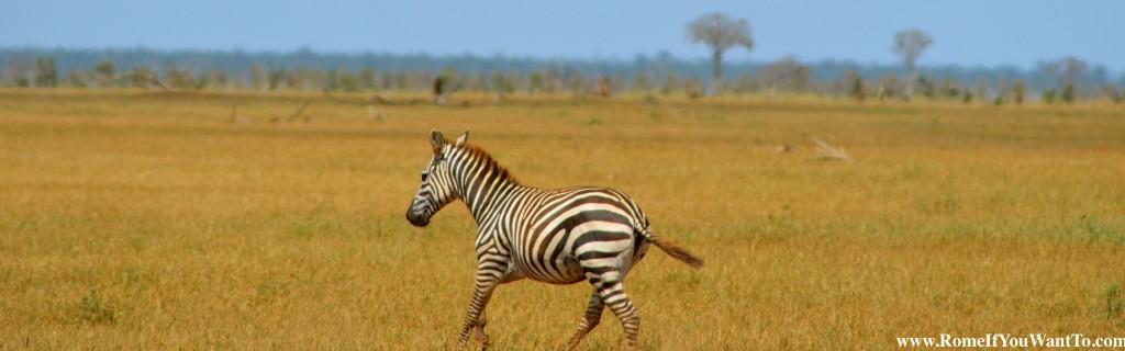 Kenya Zebras 5