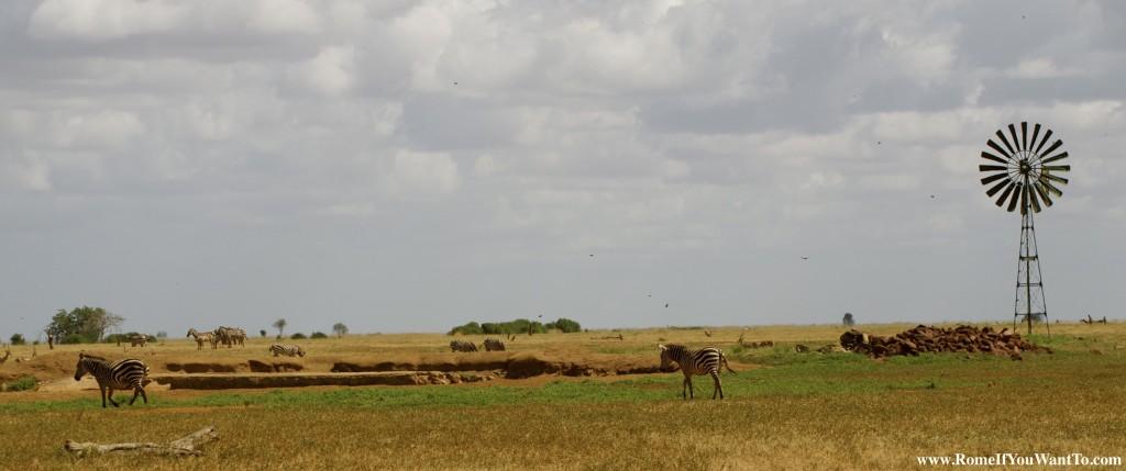 Kenya Zebras 8