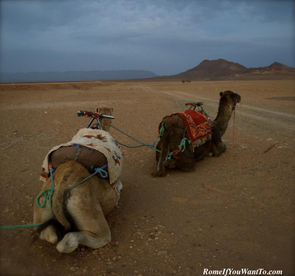 I named my camel Francesco.