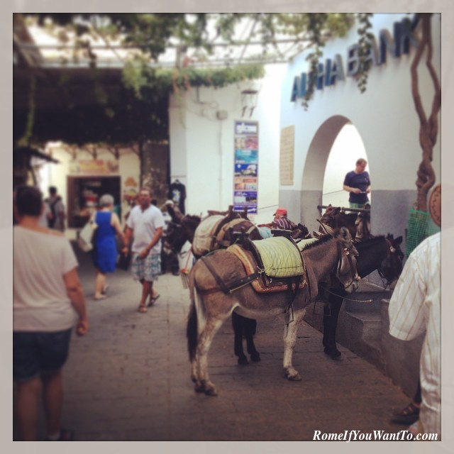 Greece - Donkeys in Lindos Rhodes