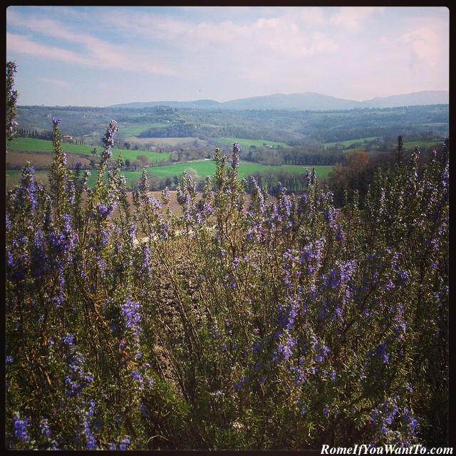 Roccafiore Vineyard, Todi, Umbria, Italy, Discover Umbria
