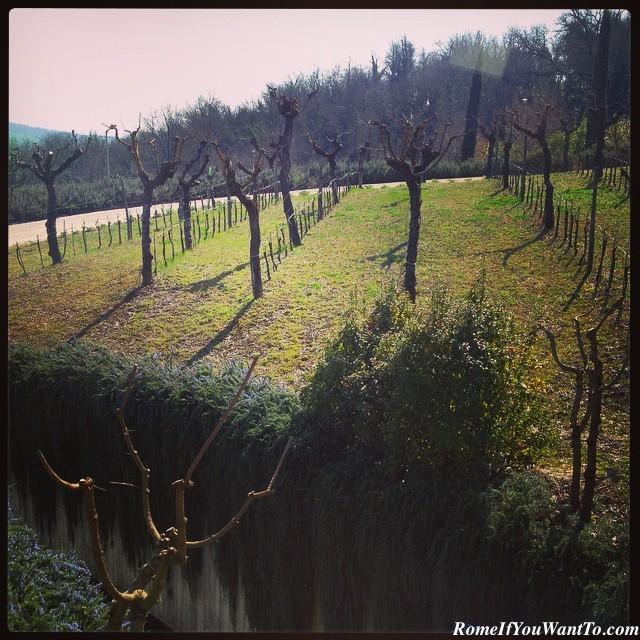 Roccafiore Vineyard, Todi, Umbria, Italy